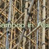 the-bamboo-bazaar-bamboo-in-asia